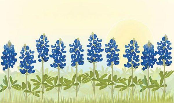 Artwork painting of Texas bluebonnets